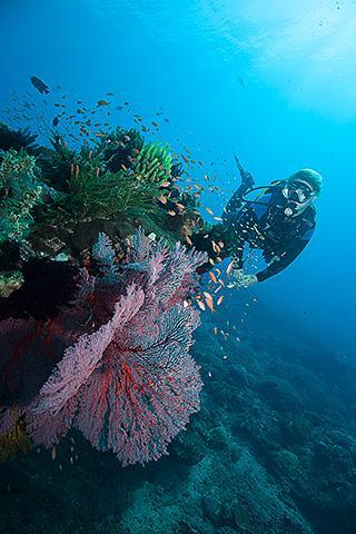 scuba divers underwater padang bai bay bali indonesia bias tugel diving site woman gorgonian vertical 320px
