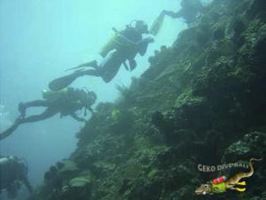 Geko Dive Bali Underwater Cleanup Wall