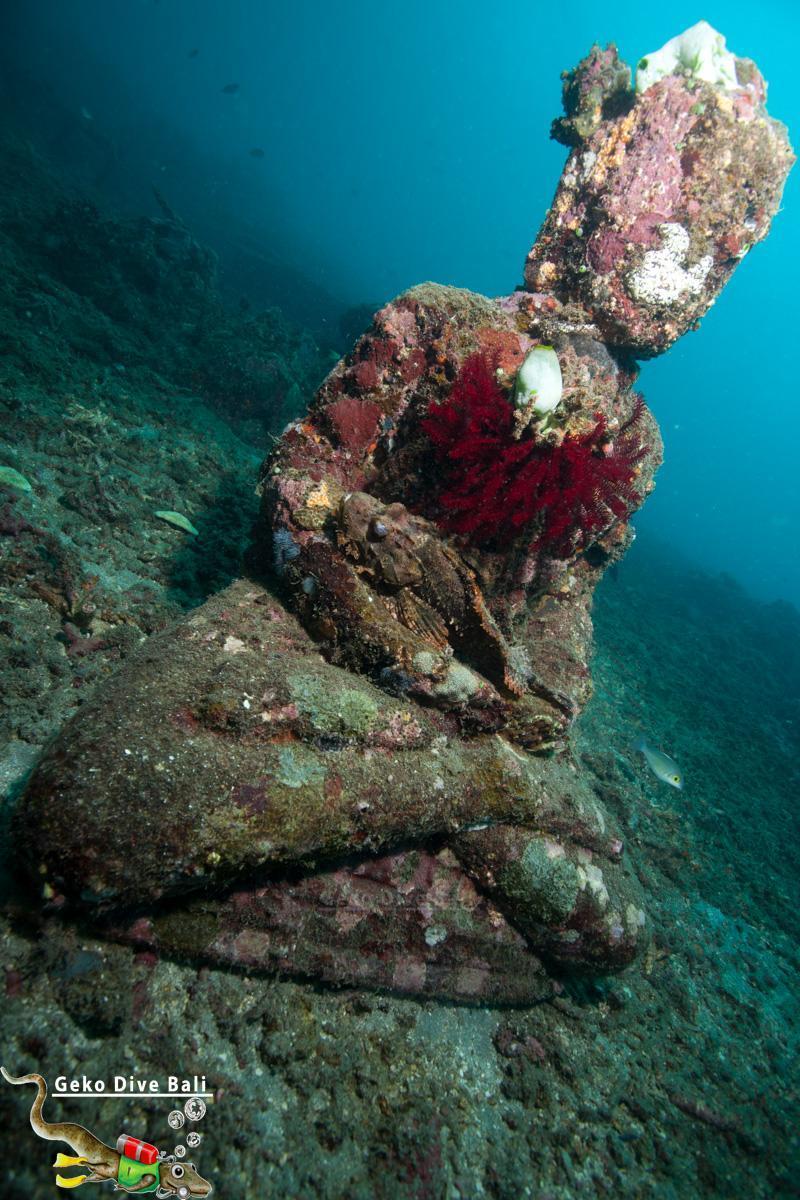 Padang bai dive sites scuba in blue lagoon jepun shark - Padi dive sites ...